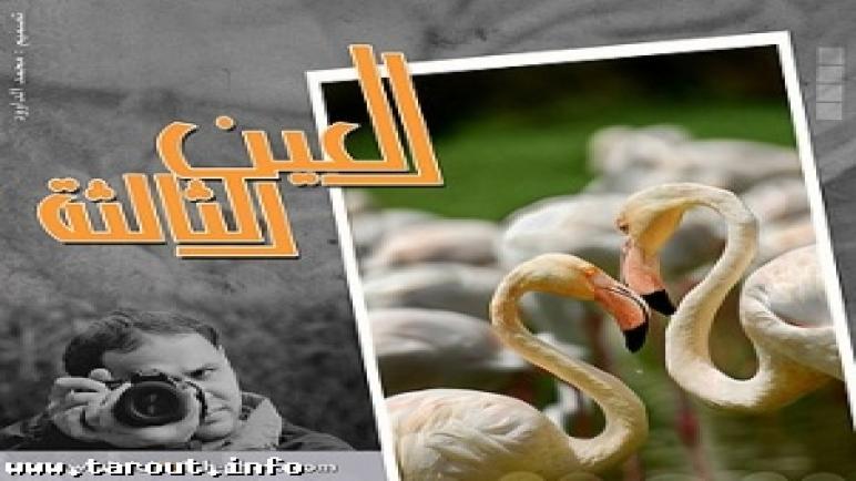 المعرض الشخصي الأول للفنان عبدالإله آل مطر